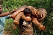 Penjaga Hutan di India Lakukan Aksi Heroik dengan Gendong Anak Gajah