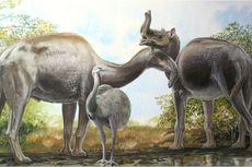 Misteri Hewan yang Bikin Charles Darwin Bingung Kini Terpecahkan
