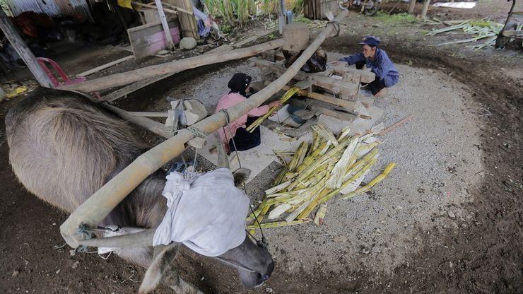 Kilang Tebu Tradisional yang Unik dan Langka di Sumatera Barat