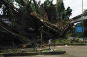 Sudin Kehutanan Jakbar Tak Punya untuk Merawat Pohon