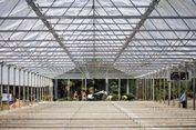 Kebun Ganja Legal, Rahasia, dan Megah Dibangun. Ini Gambaran Wajahnya