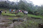 Terbawa Luapan Sungai, Seekor Buaya Muara Masuk ke Areal Sawah