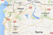 2 Harimau Telantar Aleppo Dapat 'Rumah Baru' di Belanda