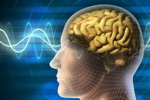 Teknologi Grafis Film Harry Potter Bantu Ilmuwan Pahami Struktur Otak