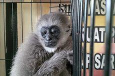 Penjualan Owa Jawa Digagalkan di Sukabumi