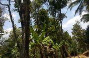 Terserang Hama, 150 Hektar Kebun Cengkeh di Madiun Punah