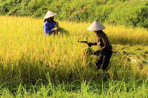 Kekurangan Air Bukan Hambatan Bertani di NTT, Ini Rahasianya