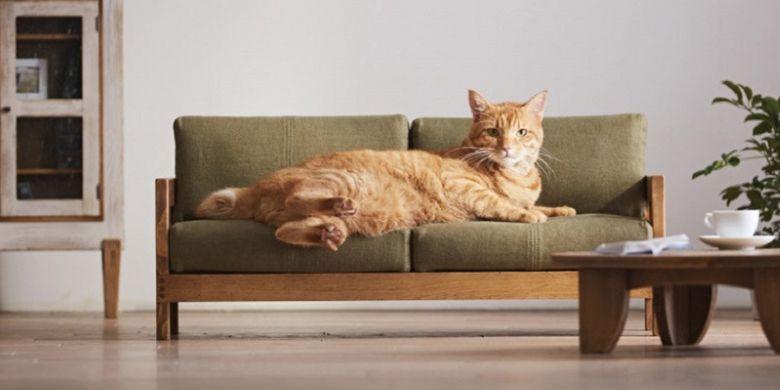 Furnitur untuk kucing