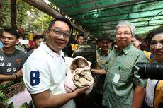 Cinta Lestari, Nama Anak Orangutan Pemberian Ridwan Kamil