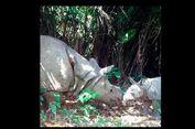4 Nama Badak Baru di TN Ujung Kulon dan Cerita di Baliknya
