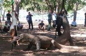 Lihat Komodo Tak Hanya di Pulau Komodo, di Sini Juga Bisa