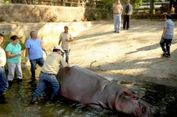 Hewannya Mati Beruntun, Kebun Binatang El Salvador Diselidiki