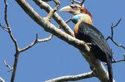 Fotografer Pun Ikut Kompetisi Foto Burung di TN MataLawa Sumba