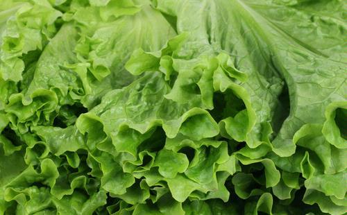 sayuran yang tercemar menjadi penyebab terbesar keracunan makanan