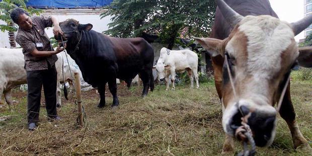 Pemprov DKI Jakarta Bagikan Kupon Daging Kurban 1250 Kupan Kepada Warga