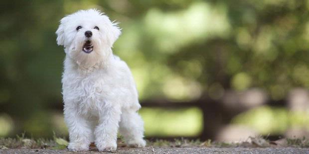 Perempuan Bunuh Diri Karena Anjing.serbatujuh.blogspot.com