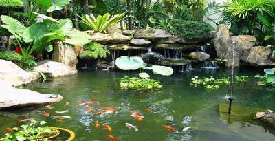 kolam ikan dan daya pikat batu koral