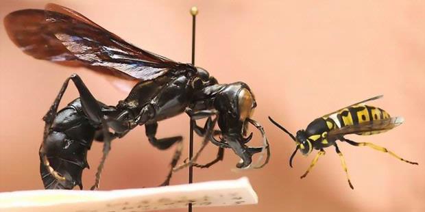 Inilah 194 Spesies Serangga Baru di Mekongga
