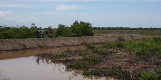 Dans la régence de Langkat, la mangrove a laissé la place aux plantations de palmiers à huile, au grand dam des pêcheurs locaux (Kompas/Aufrida Wismi).
