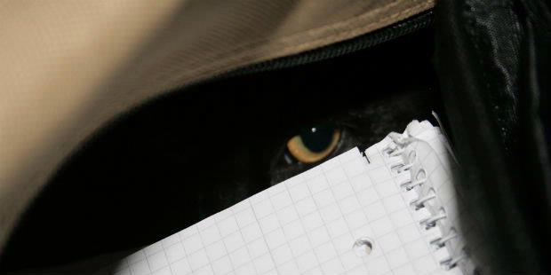 http://assets.kompas.com/data/photo/2011/11/14/0749116620X310.jpg