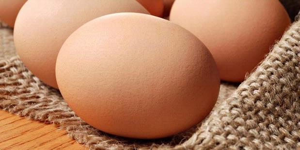 Pentingnya Telur bagi Tubuh Kita
