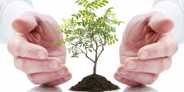 pesantren-1000-pohon