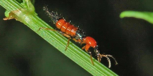 10 Kiat Menghadapi Serangga Tomcat