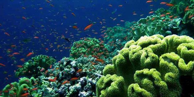 Profil Legkap Cagar Alam Wakatobi Indonesia