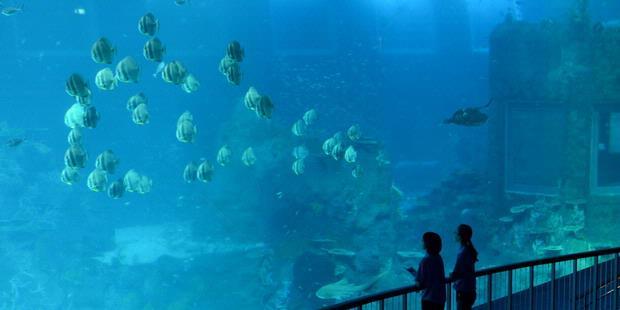 1715598-akuarium-terbesar-singapura-620X310.jpg