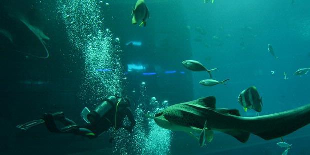 1724022-akuarium-terbesar-singapura-620X310.jpg