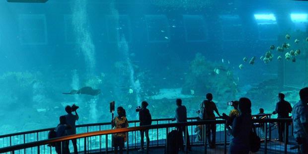 1726084-akuarium-terbesar-singapura-620X310.jpg
