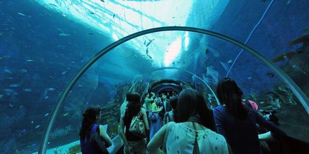 1750434-akuarium-terbesar-singapura-620X310.jpg