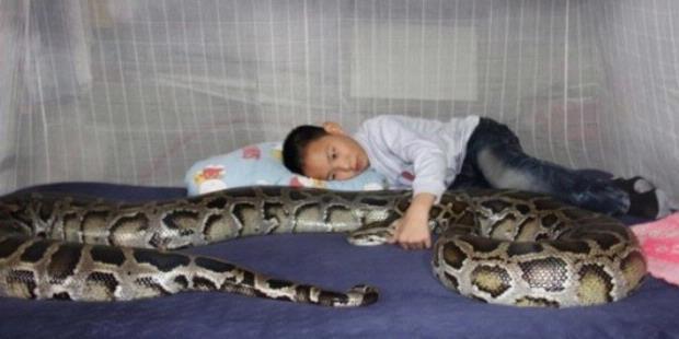Bocah China Hidup Bersama Ular sejak Lahir