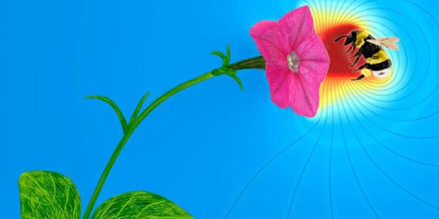 Bukan Isapan Jempol Bunga Bisa Bicara Dengan Listrik