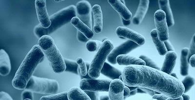 """Bakteri yang diberi julukan """"mimpi buruk"""" karena kebal pada"""