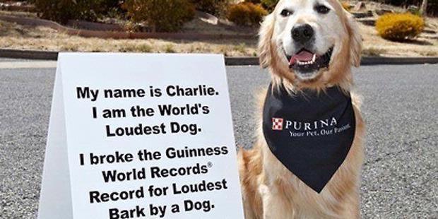 Anjing Ini Menggonggong Paling Keras di Dunia