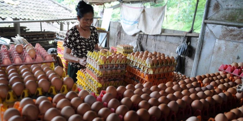 harga telur bandung