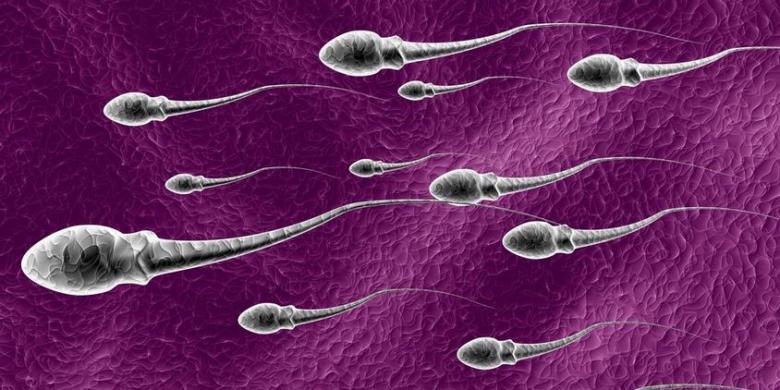Inilah Sayuran Paling Bagus buat Sperma