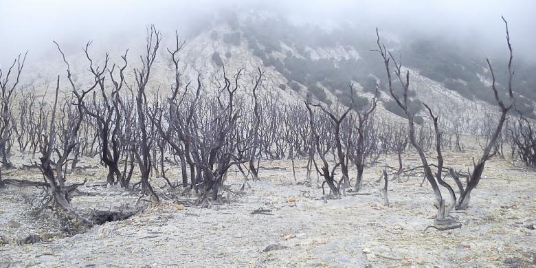Image result for gunung papandayan garut