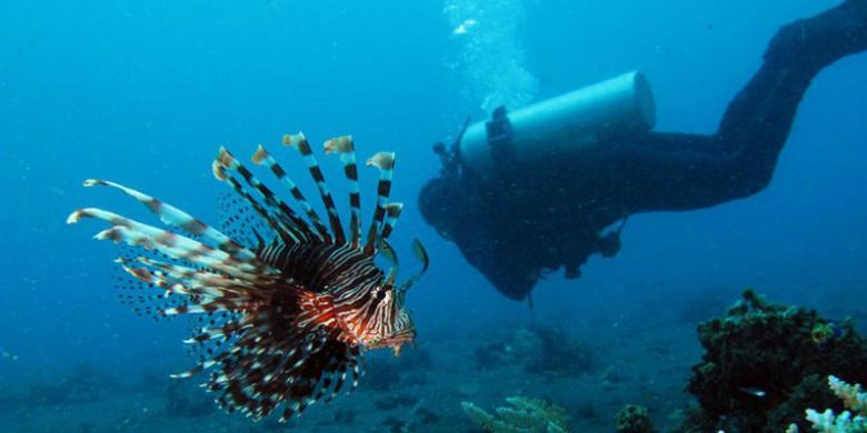 Jeju Air Dan Jin Air Tertarik Terbang Ke Manado Dan Lombok