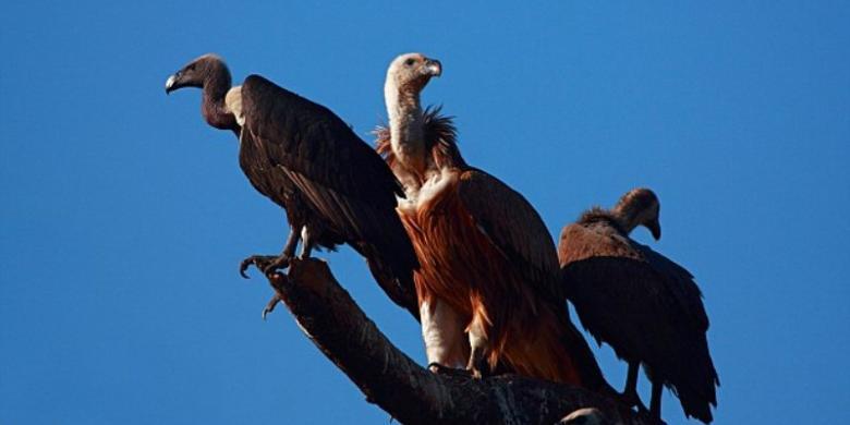 gudang burung kisah tragis si penjagal asal spanyol