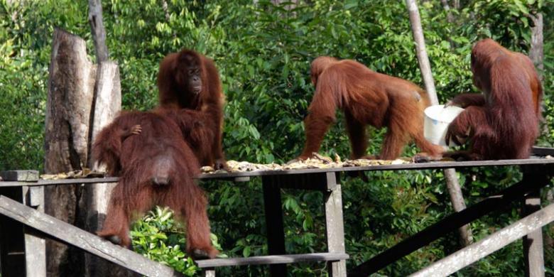 5 Destinasi Serba Monyet di Tahun Monyet