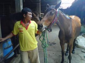 Kisah Aura, Solekha, Srikandi, dan Agustin, Kuda Penarik Kereta untuk