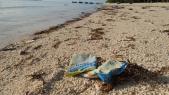 Sampah Asal Malaysia Kotori Keindahan Pantai Maratua di Berau