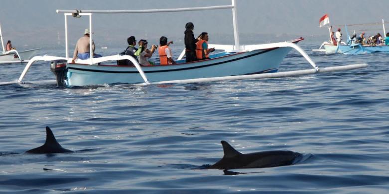Perlu Kesabaran Untuk Lihat Lumba-lumba Di Lovina