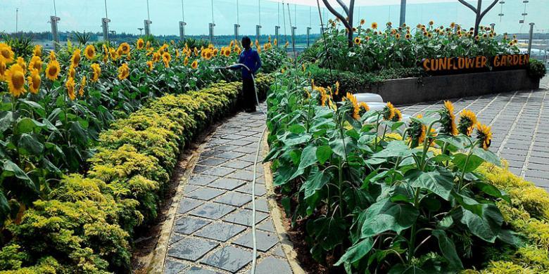 Garden Hopping, Jelajah Taman Cantik di Changi Airport Yuk!
