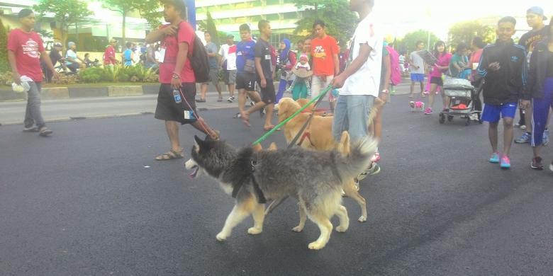 Pemilik Anjing Adakan Aksi Tolak Makan Daging Anjing