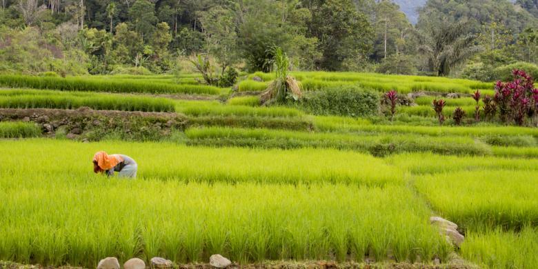 Persawahan Tangsel Menyusut, Tersisa Kurang dari 200 Hektar