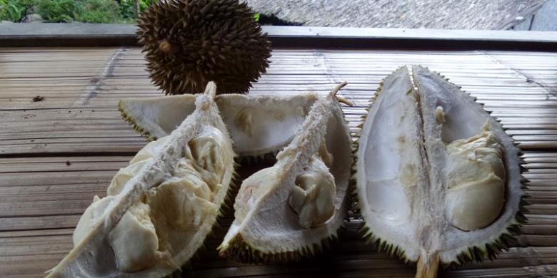 Durian Baduy Gagal Panen, Masih Ada Aktivitas Lain…