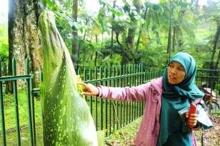 Pelempar Bunga Bangkai Minta Maaf ke Pihak Kebun Raya Cibodas